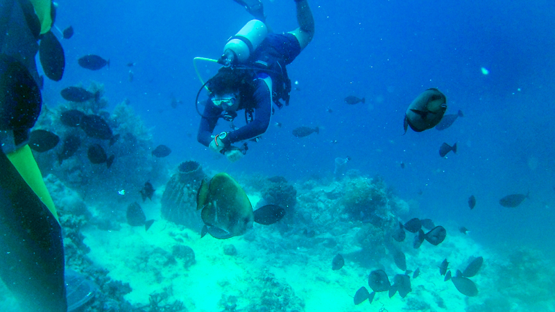 Learning How to Scuba Dive in the Philippines