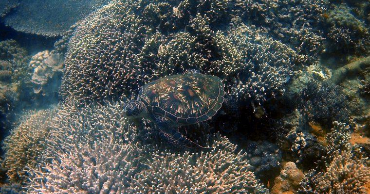 Apo Island, Dumaguete, Philippines